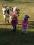 Ponybilder 088.JPG